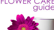 Flower Care Guide