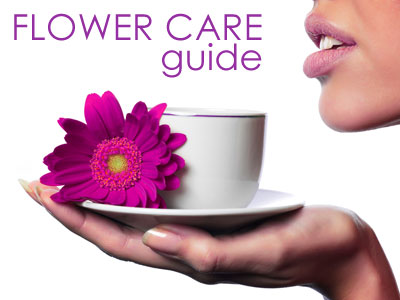 how to take care of fresh cut flowers